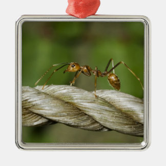 Ant Crossing Abaca Rope Ornament