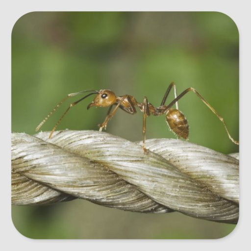 Ant Crossing Abaca Rope Stickers