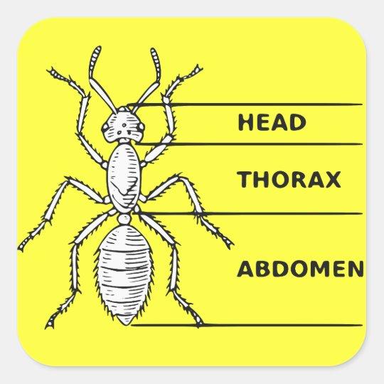 Ant Diagram Square Sticker