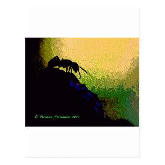 ant e postcard