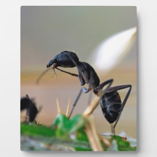Ant eating insect photo plaques
