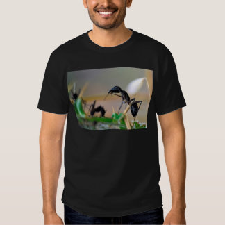 Ant eating insect t shirt