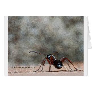 ant h card