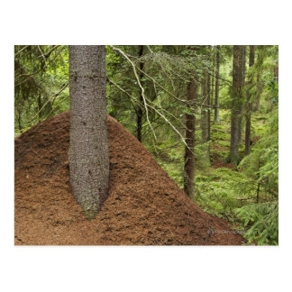 Ant hill in forest post card