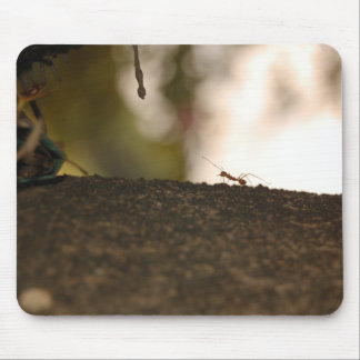 Ant Mouse Pads