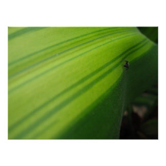 Ant on a Leaf Poster