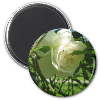 Ant on White Rose 2 Inch Round Magnet