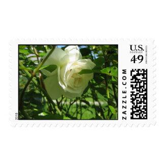 Ant on White Rose Stamp