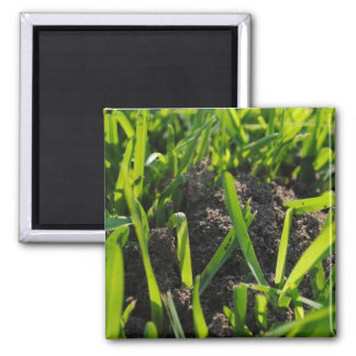 Ant Pile 2 Inch Square Magnet