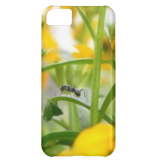 Ant Portrait With Siberian Wallflowers iPhone 5C Cover