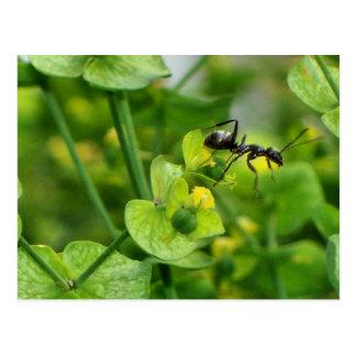 Ant Postcard