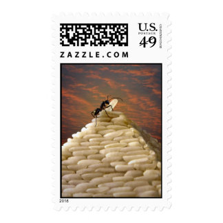 Ant Stamp