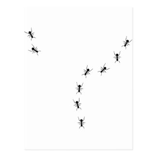 ant trail icon postcard