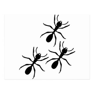 ant trail postcard