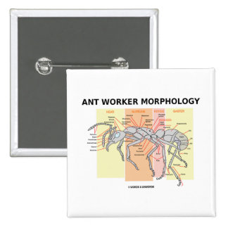 Ant Worker Morphology Button