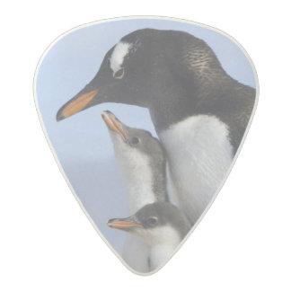 Antarctic Peninsula, Neko Harbour, Gentoo Acetal Guitar Pick