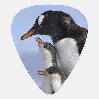 Antarctic Peninsula, Neko Harbour, Gentoo Guitar Pick