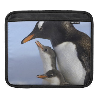 Antarctic Peninsula, Neko Harbour, Gentoo iPad Sleeve