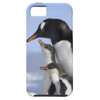 Antarctic Peninsula, Neko Harbour, Gentoo iPhone SE/5/5s Case