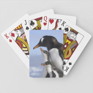 Antarctic Peninsula, Neko Harbour, Gentoo Playing Cards