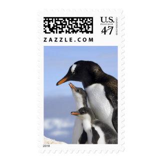 Antarctic Peninsula, Neko Harbour, Gentoo Postage
