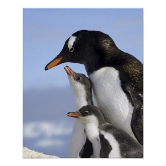 Antarctic Peninsula, Neko Harbour, Gentoo Print