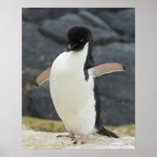Antarctic Poster