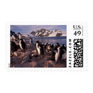 Antarctica, Adelie penguin chicks Stamps