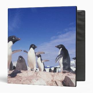 Antarctica, Adelie Penguin Pygoscelis Binder