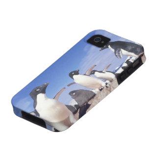 Antarctica, Adelie Penguin Pygoscelis Case-Mate iPhone 4 Cover