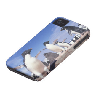 Antarctica, Adelie Penguin Pygoscelis iPhone 4 Cover