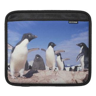 Antarctica, Adelie Penguin Pygoscelis iPad Sleeve
