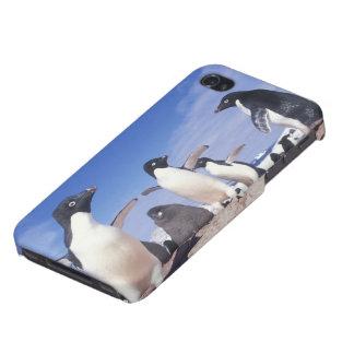 Antarctica, Adelie Penguin Pygoscelis Case For iPhone 4