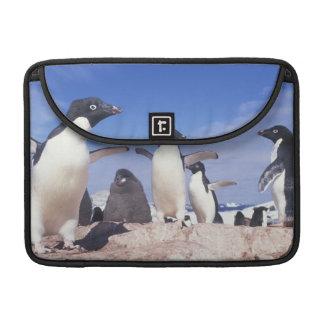 Antarctica, Adelie Penguin Pygoscelis MacBook Pro Sleeves