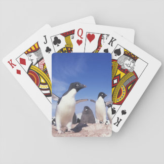 Antarctica, Adelie Penguin Pygoscelis Playing Cards