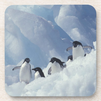 Antarctica. Adelie penguins Beverage Coaster