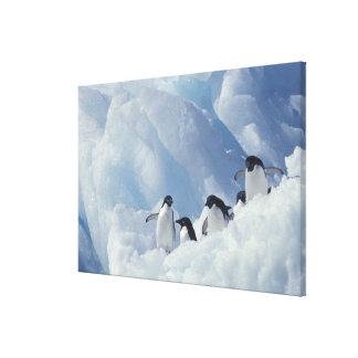 Antarctica. Adelie penguins Canvas Print