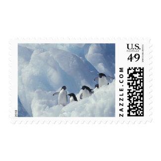 Antarctica. Adelie penguins Stamp