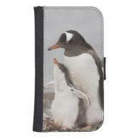 Antarctica, Aitcho Island. Gentoo penguin chick Phone Wallet Case