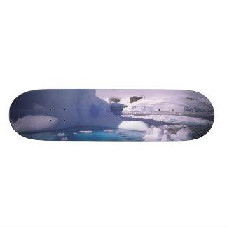 Antarctica. Antarctic icescapes 2 Skateboard