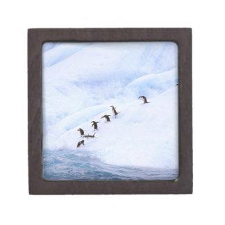 Antarctica, Antarctic Peninsula. Chinstrap Gift Box