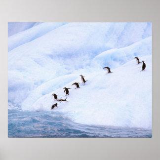 Antarctica, Antarctic Peninsula. Chinstrap Posters