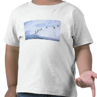Antarctica, Antarctic Peninsula. Chinstrap T Shirt