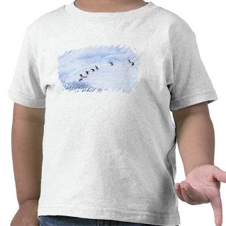 Antarctica, Antarctic Peninsula. Chinstrap Tshirts