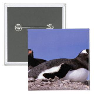 Antarctica, Antarctic Peninsula, Peterman Pinback Buttons