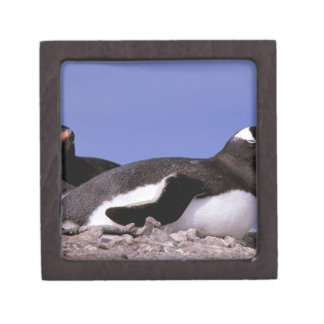 Antarctica, Antarctic Peninsula, Peterman Gift Box