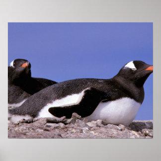Antarctica, Antarctic Peninsula, Peterman Posters