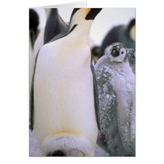 Antarctica, Antarctic Peninsula, Weddell Sea, 2 Greeting Card