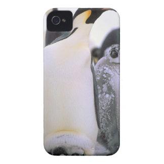Antarctica, Antarctic Peninsula, Weddell Sea, 2 iPhone 4 Case-Mate Cases
