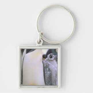 Antarctica, Antarctic Peninsula, Weddell Sea, 2 Keychain